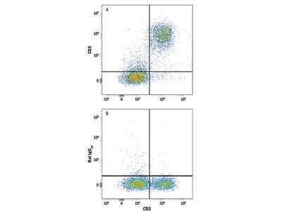 CD5 APC-conjugated Antibody