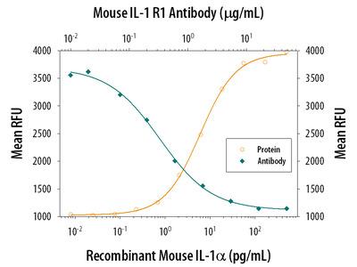 PSMB10 /MECL1 Antibody