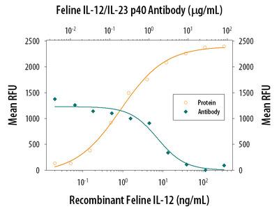 Cited-2 Antibody