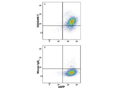 Human CEACAM-7 Antibody