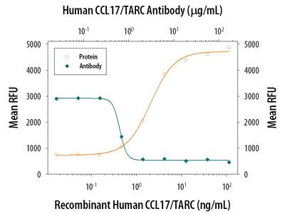 CCL17 /TARC Antibody