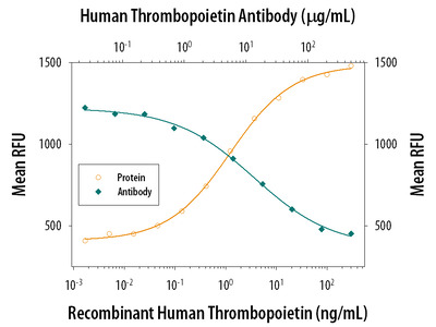 Thrombopoietin /Tpo Antibody