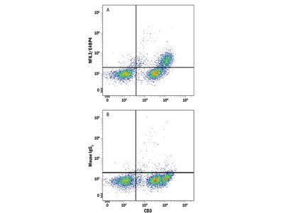NFIL3 / E4BP4 Antibody