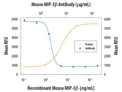 CCL19 /MIP-3 beta Antibody