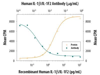 IL-1 beta / IL-1F2 Antibody