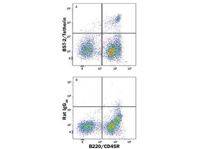 Mouse BST-2 / Tetherin Antibody