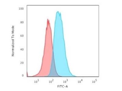 GFAP Antibody (SPM248)