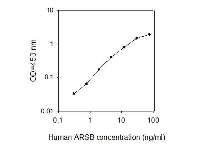 Human Arylsulfatase B/ARSB ELISA