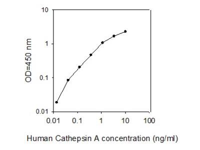 Human Cathepsin A/CTSA ELISA