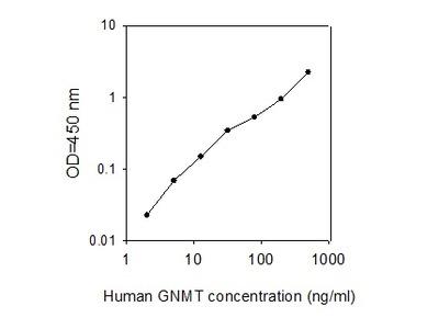 Human GNMT ELISA