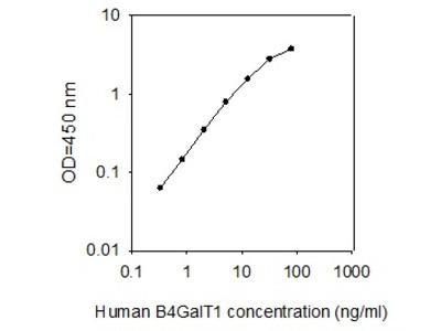 Human B4GalT1 ELISA