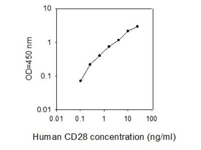 Human CD28 ELISA