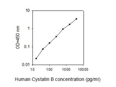 Human Cystatin B/CSTB ELISA