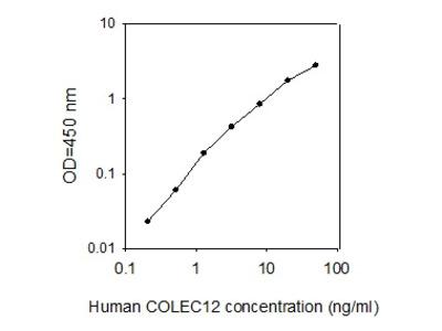 Human Collectin-12/CL-P1 ELISA