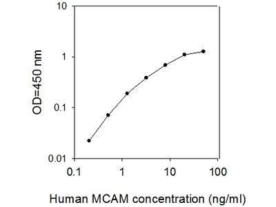 Human MCAM/CD146 ELISA