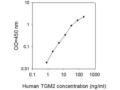 Human Transglutaminase 2/TGM2 ELISA