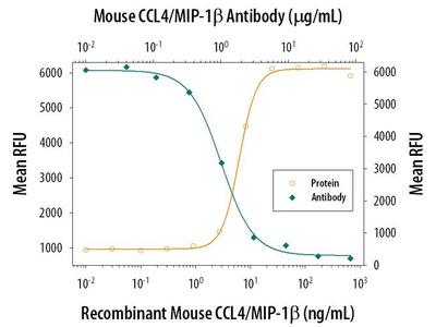 CCL4 Antibody