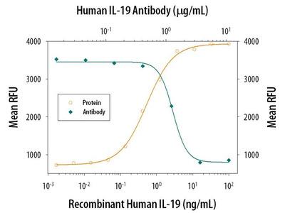 IL-19 Polyclonal Antibody