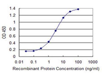 SOX12 Monoclonal Antibody (4A9)