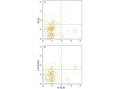 CSF3R Monoclonal Antibody (723806)