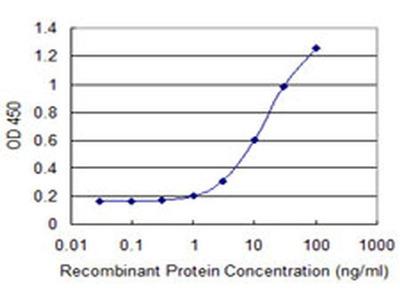 SULT1C2 Monoclonal Antibody (4D9)