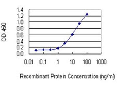 C1orf57 Monoclonal Antibody (2C3)