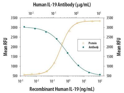 IL-19 Monoclonal Antibody (152112)