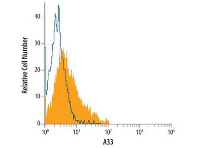 A33 Monoclonal Antibody (402104)