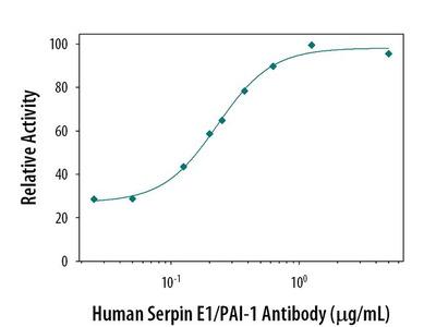 PAI1 Monoclonal Antibody (242816)