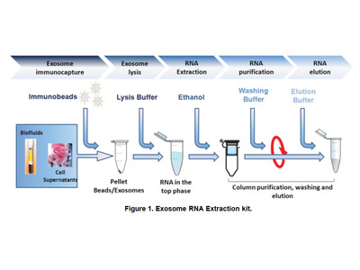 TumorExoRNA™ Tumor-derived exosome immunocapture and RNA extraction kit (10 reactions)