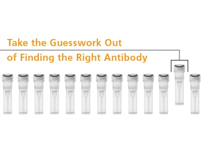EasySep™ Verified Antibodies for Immunology Research