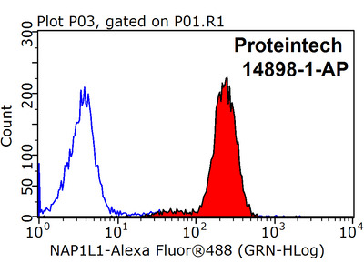 NAP1L1 antibody - KD/KO Validated