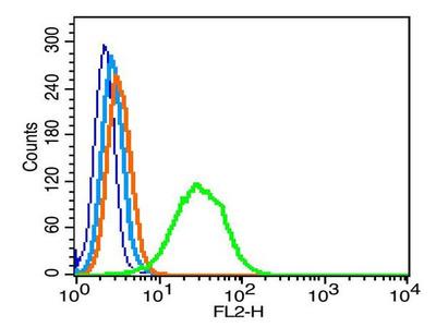 GPM6A Antibody, Cy3 Conjugated