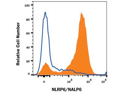 Human NLRP6 / NALP6 Antibody