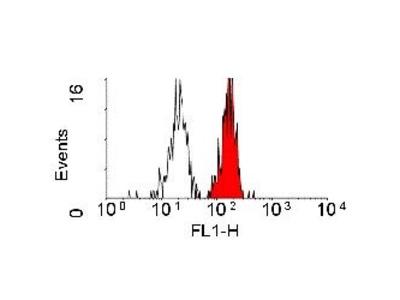 CD98 Monoclonal Antibody (44D7)