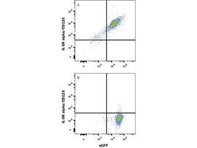 IL-5 R alpha /CD125 PE-conjugated Antibody