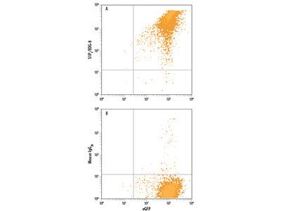 S1P5 / EDG-8 APC-conjugated Antibody