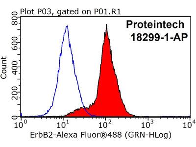 HER2/ErbB2 antibody