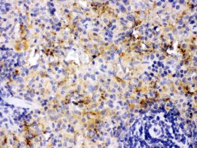 Anti-PF4 Antibody Picoband