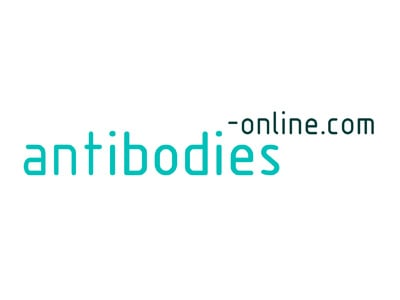 anti-interleukin 7 Antibody
