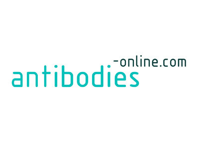 anti-Interleukin 7 (IL7) (full length) antibody
