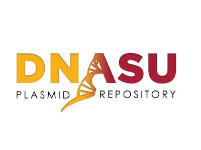 0610007P22Rik (Mus musculus) in pDONR221 (Gateway donor/master vector)
